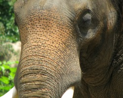 Elephant Riding Travel Insurance